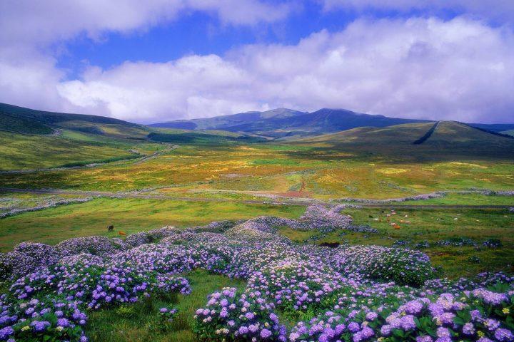 Acores - Flores