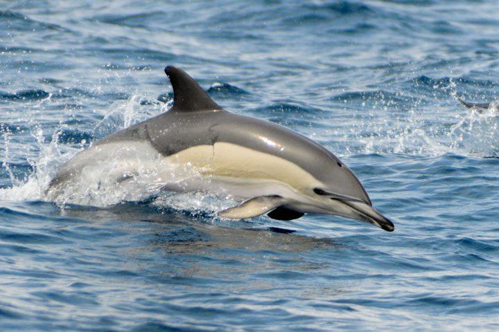 açores - dauphin - 80 jours voyages